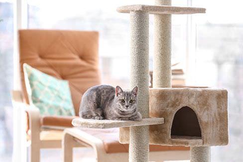 Top 5 meilleurs grattoirs et griffoirs pour chats