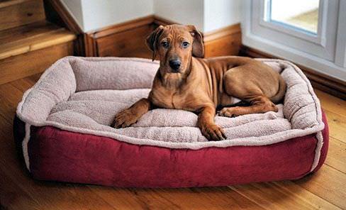Top 5 meilleurs lits pour chiens