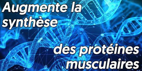 La synthèse des protéines est augmentée par la whey