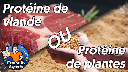 Protéine de viande ou protéine de plantes?