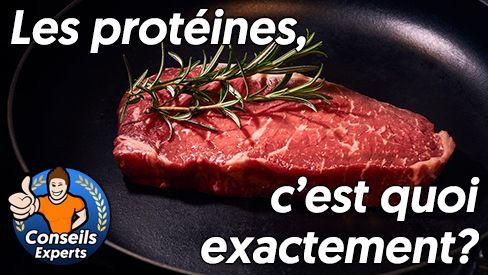 Que sont les protéines et quelle est leur utilité?